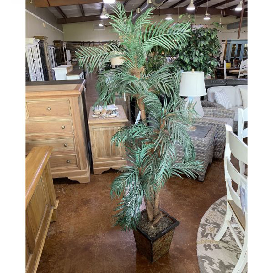 Picture of 6 FOOT PALM TREE